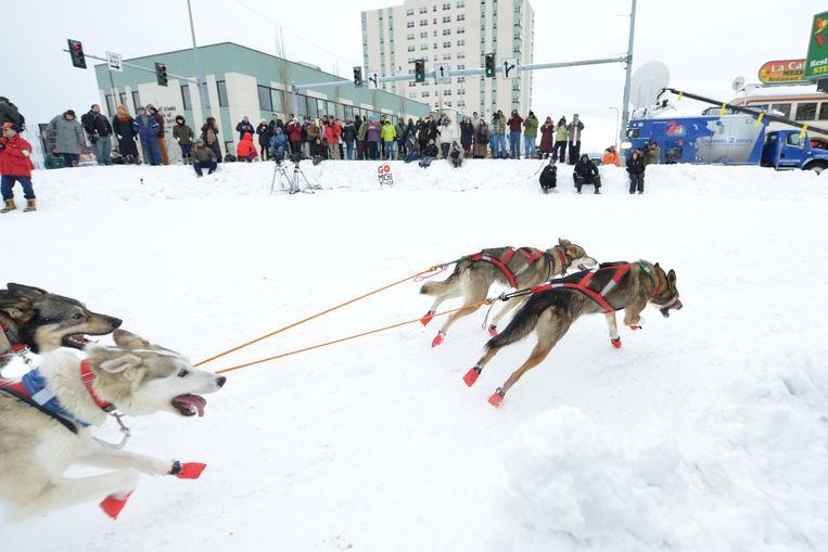 Tara Cicatello 's team rounds the corner of 4th and Cordova during the ceremonial start of the Iditarod dog sled race in Anchorage, Alaska, U.S. March 3, 2018.  REUTERS/Mark Meyer Beeld REUTERS