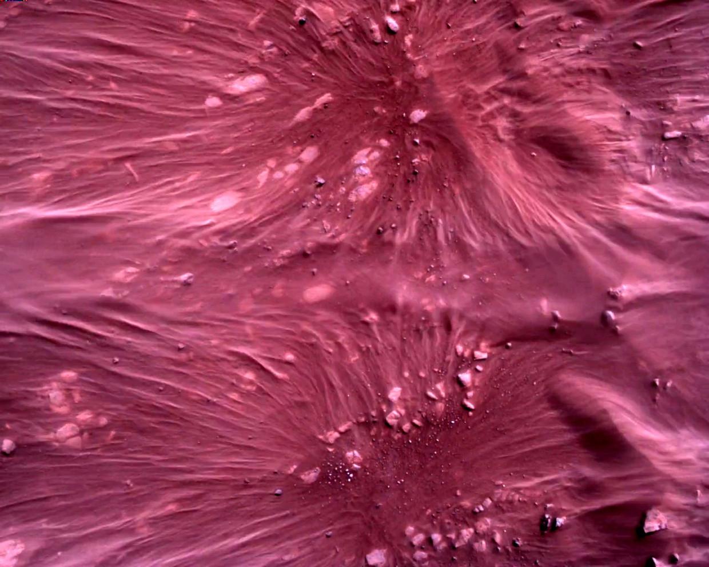 Het oppervlak van Mars direct onder NASA's Mars Perseverance-rover wordt gezien met behulp van de Rover Down-Look Camera in een afbeelding die op 22 februari 2021 is gemaakt.