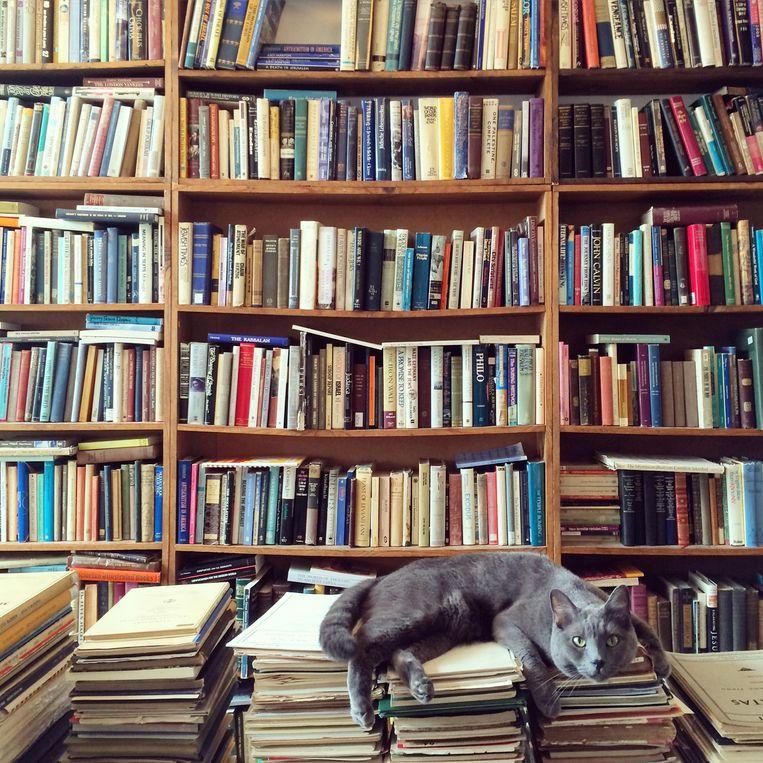 In week 51 toen de winkels dichtmoesten was de omzetdaling in de fysieke boekhandel 66 procent.  Beeld Getty Images/EyeEm