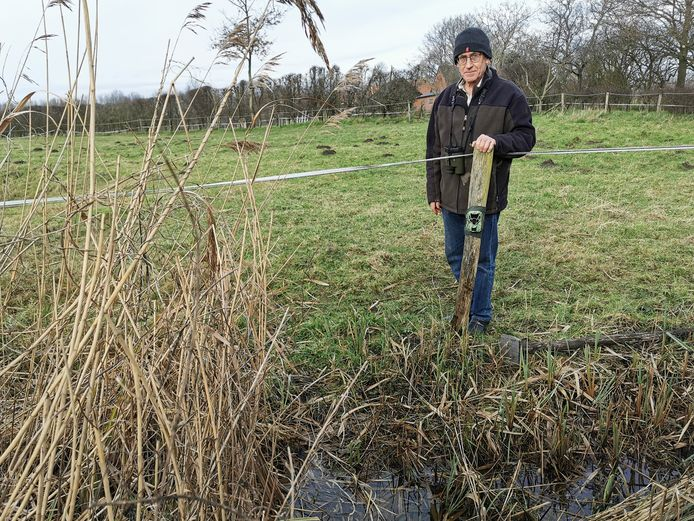 Luud Persijn bij de wildcamera aan het Pereboomsgat bij Koewacht, waarmee hij hoopt de eerste otter vast te leggen die Zeeland binnentrekt vanuit het vlakbij gelegen België.