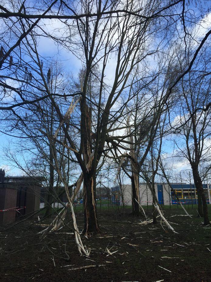 De gespleten bomen op het Emergis-terrein.