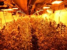 Grote wietkwekerij in Hoofdplaat, 750 planten in verborgen ruimte achter een kast