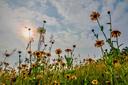 Foto gemaakt op de Groote Heide bij Heeze: De bloemenpracht op de Groote Heide is fantastisch op een mooie, zonnige dag!  Vriendelijke Groet, Ben Pollmann Ds. Kremerstraat 20 5591GH Heeze