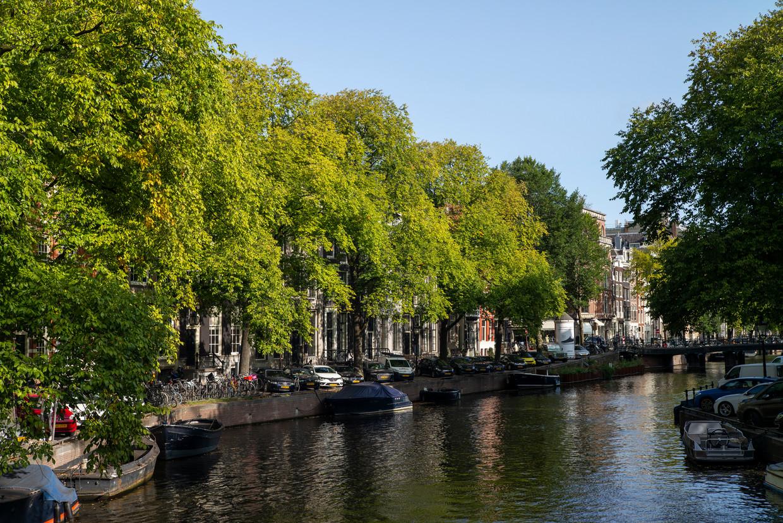 De bomen op de Herengracht die dreigen te gaan worden gekapt.