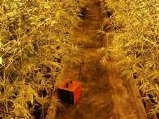 Man uit Heerewaarden moet bijna 2 ton aan de Staat betalen voor megawietplantage
