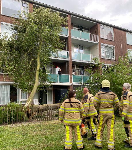 Storm gooit boom tegen flatgebouw in Deventer: bewoonster ziet takken op haar afkomen