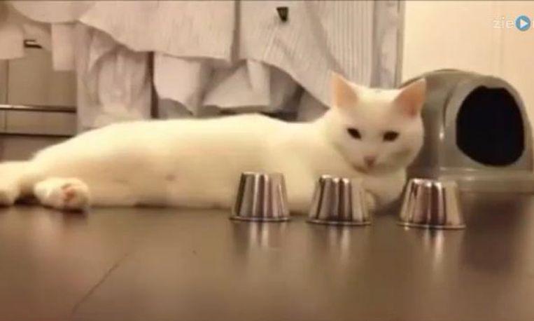 Weekendvermaak: bonte verzameling kattenfilmpjes