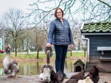 Annemarie's kippeneiland is een blikvanger in Dubbeldam: 'Hanen houden kan hier zonder gezeur'