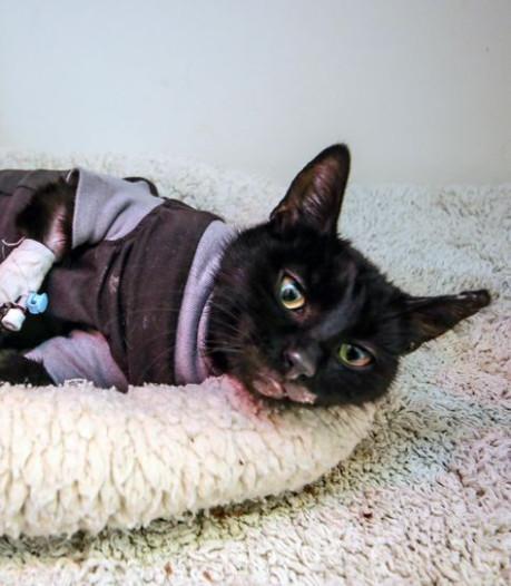 Maximale straf voor dierenbeul die kat Sprotje in oven stopte
