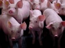 Milieufederatie wil stokje steken voor uitbreiding van stallen in Rucphen