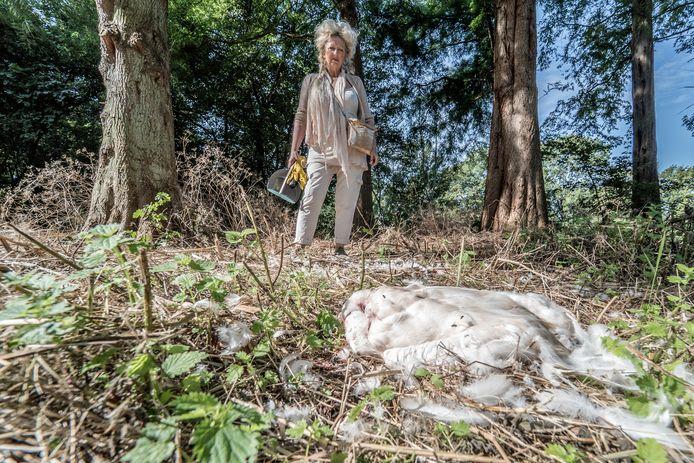 Jolanda Gaal snapt de dode zwanen niet, waarom moest dit gebeuren?