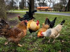 Van kippen tot een grasmaaier: verwarde man steelt tijdens ochtendrondje wat hij tegen komt