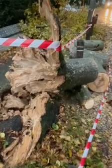 La tempête Aurore souffle sur la Belgique: le point dans votre région