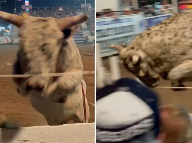 Video van de Dag | Deze stier jaagt publiek op tribune stuipen op het lijf: boe!