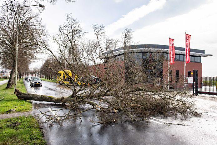 Een boom in Hoogezand is omgewaaid en op een auto beland.