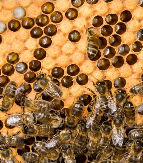 Deux ruches bientôt installées sur le toit de la Cité administrative à Seraing