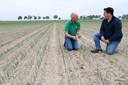 DINTELOORD, Jan Stads / Pix4Profs Van West-Brabantse bodem, Hoeve Karolina, akkerbouw en schapen. Eigenaar Kees Breure en zijn opvolger David Kleiss in het veld waar de rode uien groeien