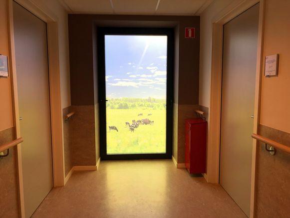 Een deur geeft een blik op een wei vol met grazende koeien.