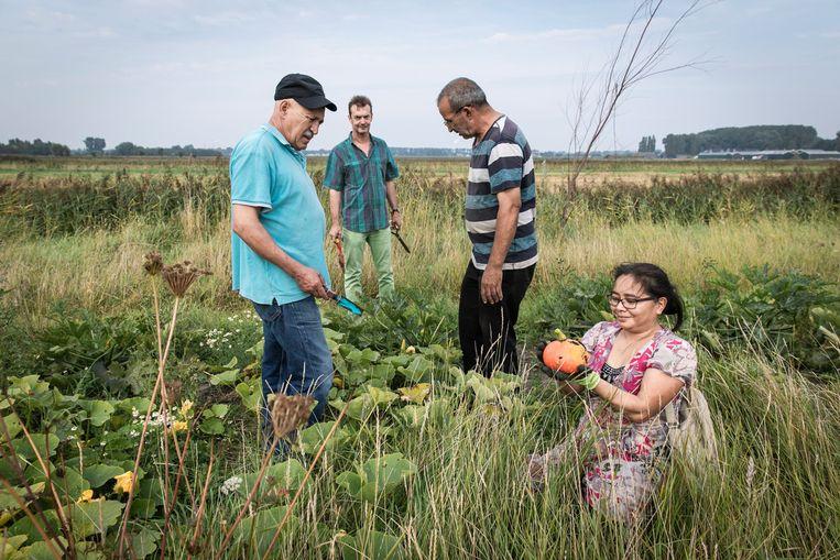 Volkstuinierders in Lutkemeerpolder oogsten groenten voor soep en couscous voor een actiedag. Beeld DINGENA MOL