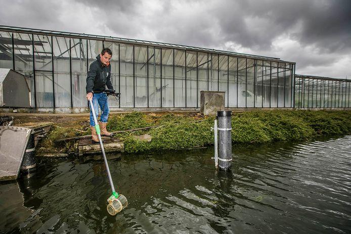Het Hoogheemraadschap van Delfland meet de waterkwaliteit tussen de kassen