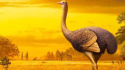 Is deze 'struisvogel' van 450 kilo de grootste en zwaarste vogel die ooit in Europa leefde?