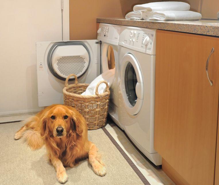 Wasmachine hond Beeld Getty Images