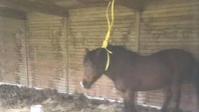 """Eigenaar betrapt man die paard met tuinslang vastbindt: """"Wou hij haar verminken en is het dezelfde dierenbeul als de vorige keer?"""""""