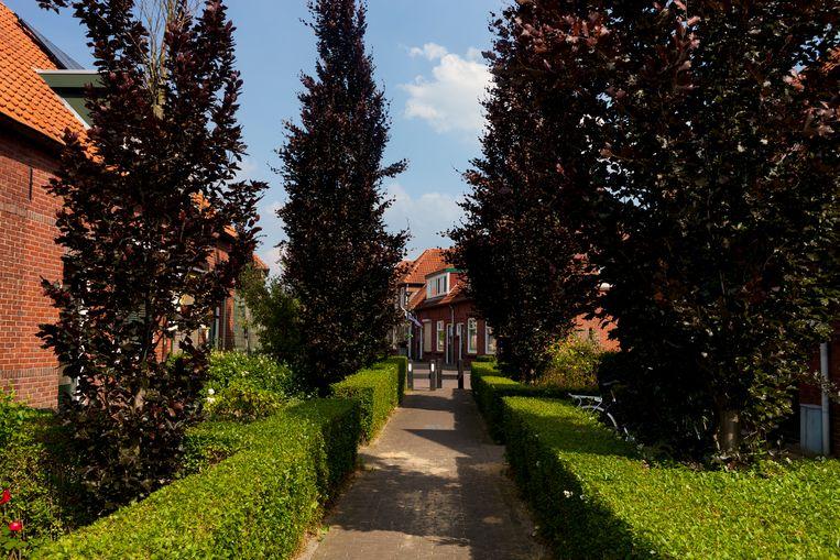 De Iepenstraat, waar Gerrit Komrij in zijn jeugd op nummer 23 woonde. Beeld Renate Beense