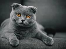 Ces chats seront bientôt interdits à Bruxelles