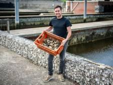 De platte Zeeuwse oester is hip, en dit jaar toch nog lekkerder dan verwacht