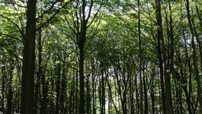 Oude stortplaats aan Hoek verandert in bos