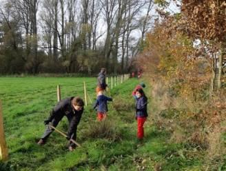 300 nieuwe boompjes geplant in natuurgebied Honegem