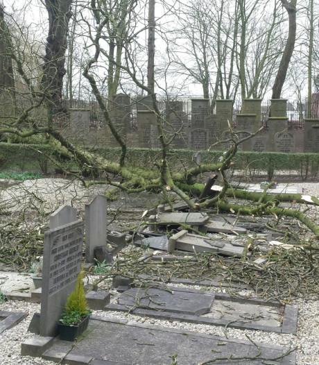 Omgewaaide boom richt ravage aan op oude begraafplaats Zaltbommel