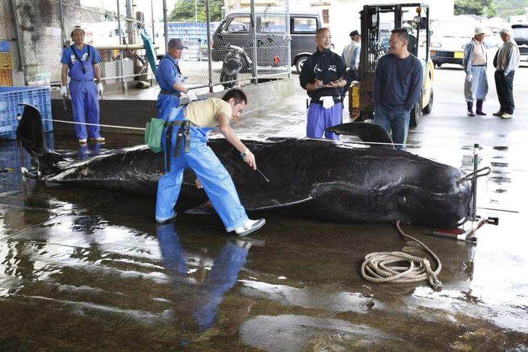 Een walvis in de haven van Taji, op archiefbeeld. Beeld reuters