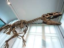 Un dinosaure inédit fait son entrée au Musée des Sciences naturelles