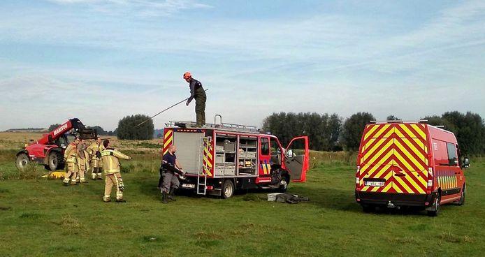 Het dierenredteam van brandweer Westhoek kwam ter plaatse om de kolos te bevrijden uit de gracht langs de Koenraadstraat in Loker.