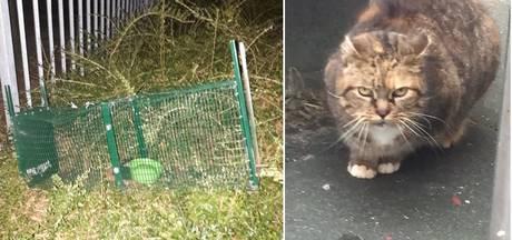 Kooi voor 'geterroriseerde' kat Maisje vernield: 'Ze is niet meer zo welkom'