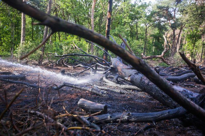 Natuurbrand bij Berkendonk in Helmond.