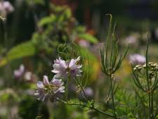'Dat wij mensen grote invloed hebben op de flora is wel zeker'