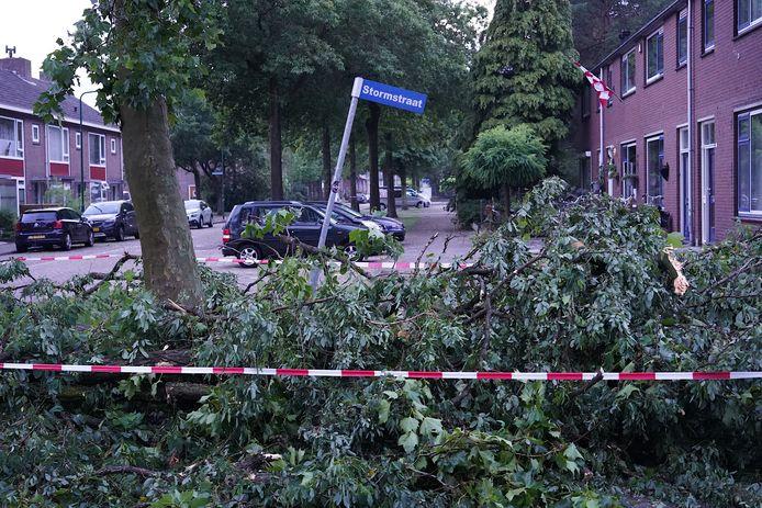 Boom valt om in Stormstraat in Rijen.