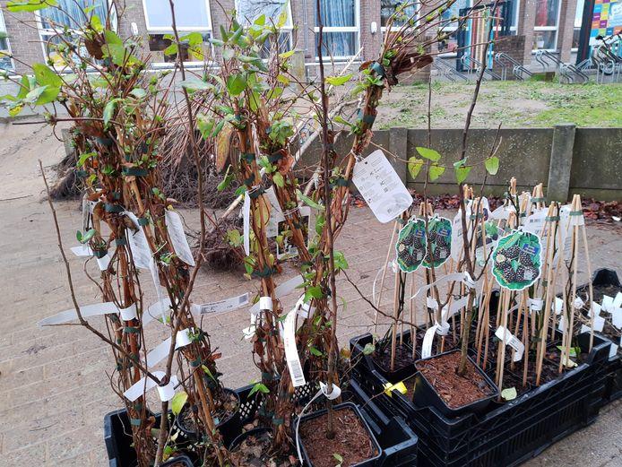 De groene speelplaats van het KCD in Denderleeuw kreeg heel wat nieuwe planten.