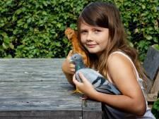 Een kip met als ouders twee postduiven? Kan het nóg gekker?