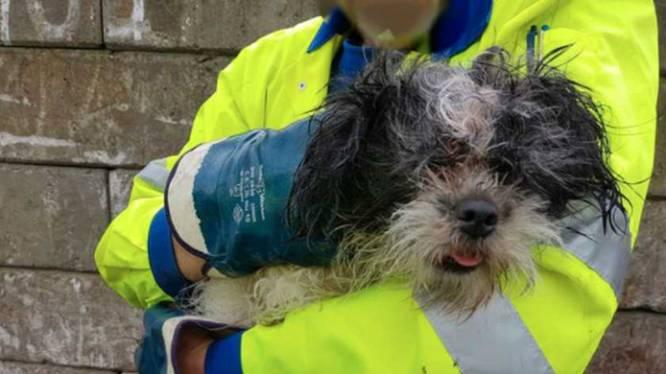 Vrouw dumpt hondje in afvalcontainer, beestje op nippertje gered in vuilniswagen