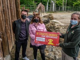 """Babygiraf Kamala in Bellewaerde door luisteraars Qmusic verkozen tot 'Strafste Snurker van Dierenland': """"Enkele dierenverzorgers pinkten traantje weg"""""""