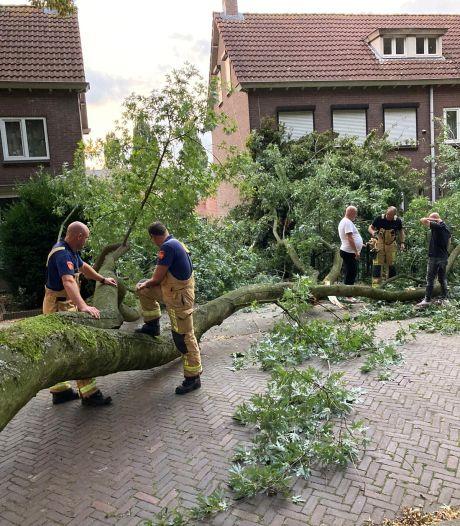 Zonder zuchtje wind breekt enorme tak af; Bewoners Hortensialaan met schrik vrij