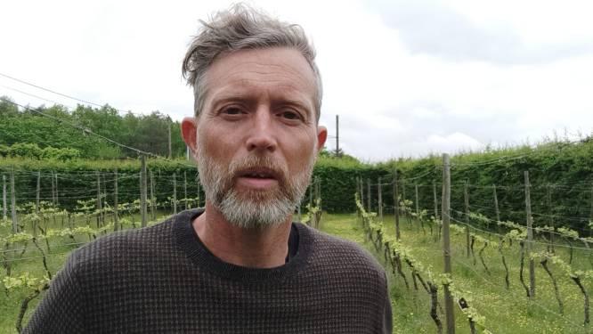 Groen wil 25,000 extra bomen in Diest
