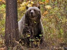 Grizzlybeer afgeschoten na dodelijk drama met slapende kampeerster (65)