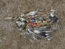 Laat deze dode albatros een extra motivatie zijn om beter te recycleren.