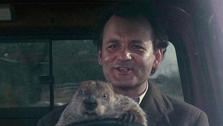 In de film Groundhog Day speelt Bill Murray een cynische journalist die verslag moet doen van de bosmarmottenceremonie in het dorpje Punxsutawney. Beeld ap