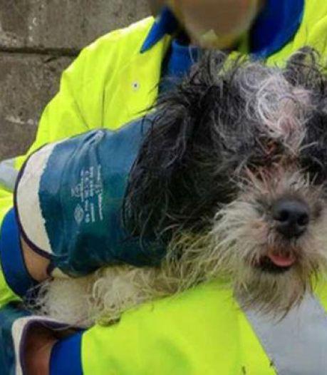 Un chien se retrouve dans un camion poubelle après avoir été jeté par sa maîtresse